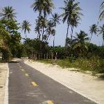 Palm trees......