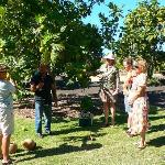 Free Guided Tours offered at 10am on Mon/Tues/Fri/Sat. Call 808-249-2798 for reservations.