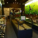 One of the exhibit rooms with a whale fossil