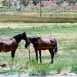 Horses on the property