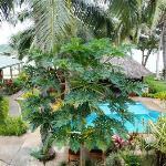 vue de la piscine famille au centre du resort