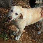 le chien du camping: Myrtille