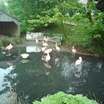 Flamingo enclosure
