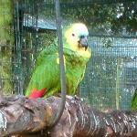 One of the parrots that stole our heart!