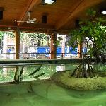 The Mangrove Tank
