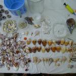 part of our shelling finds