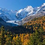 Golden automn in the Engadin with Morteratsch Glacier