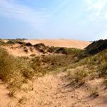 Forvie Sands Nature Reserve