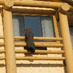 Wooden Bear looking in our window from outside hotel