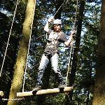 Swinging through the treetops