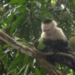 A monkey enjoying a mango near the pool