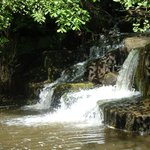 One of Hareshaw Linn's Weirs