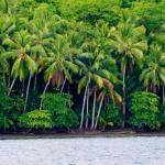 jungle down to the shoreline