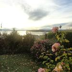 jardín con rosas hermosas