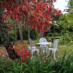 Lovely garden at Ika Lodge