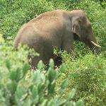 The content tusker