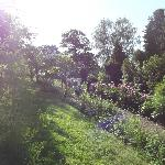 enjoying early morning views from the beautiful garden