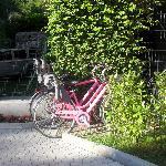 Une petite balade en vélo ?