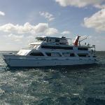 "Ship shape ""Reef Encounter"""