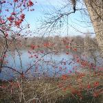 The lake in fall.