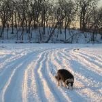The tracks were made by a bulldozer removing invasive buckthorn from the islands.