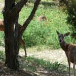 Thousands of Deer in Area and Mexican Hat plants