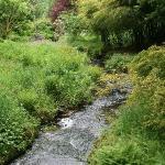 Stunning wild gardens