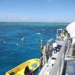 Barrie Reef