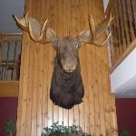 Mr Moose will always greet you when you enter the hotel.