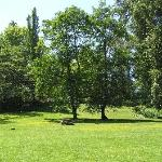 Nice grassy area - part of the 18 acres