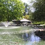 A view of the fountain and pond (covered with cottonwood blossoms)