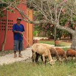 biologisch und geräuscharmer Rasenmäher