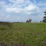 Horses on the Heath near Elspeet
