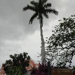 Royal Palms