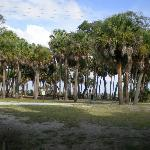 Hunting Island-beach is on the other side of trees