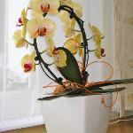 Orchidee flower