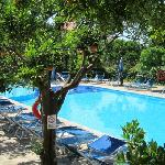 pool surrounded by orange trees...