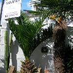 subtropical plants at Cornerways , Penzance