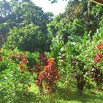Vue du jardin lorsqu'on est dans le hamac