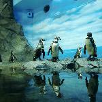 愛嬌あるペンギン