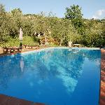 ampio giardino con piscina