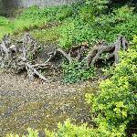 Iveagh Garden