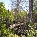 Florida's natural habitat