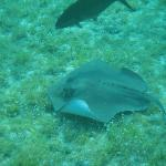 Stingray-snorkeling off the condo beach