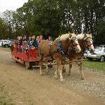 Horse Sleigh Farm
