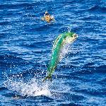 Shaun Schofield w/ Fish Castings