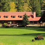 Grizzly Bear viewing on lawn at Tweedsmuir Park Lodge. Photo: Mike Wigle