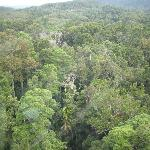 A treetop view from Skyrail gondola