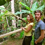 rainforest che si puo' toccare con un dito