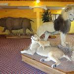 Lions & Rhino - Oh My!